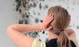 Средство от плесени на стенах и причины появления грибка